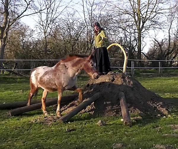Onlinekurs Pferdevertrauen
