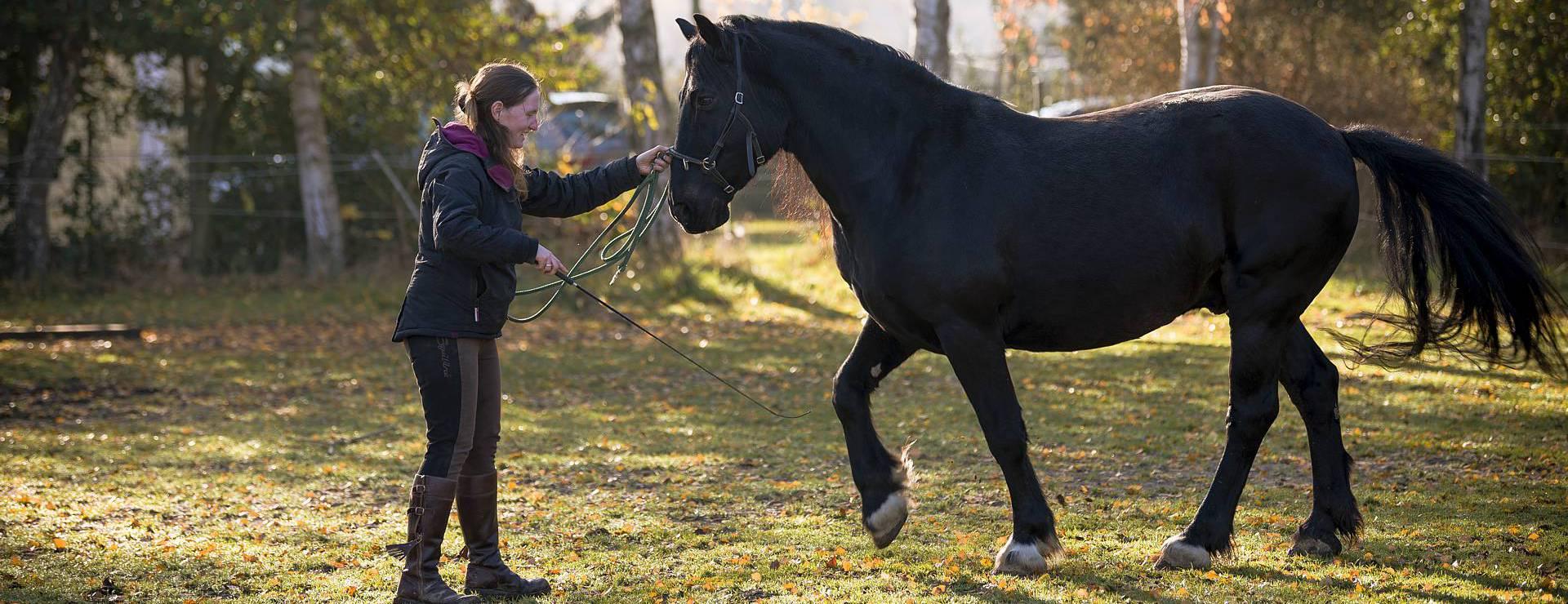 Hier lernst Du Pferde wirklich kennen